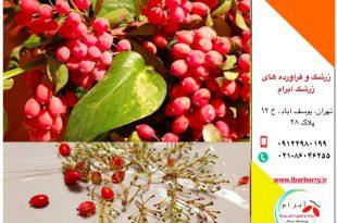 قیمت روز زرشک پفکی و دانه اناری - ۲۶ مهر ۹۸